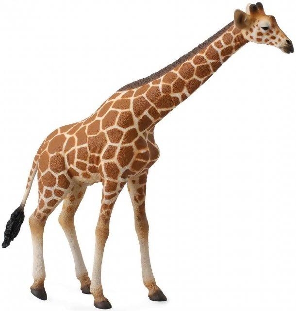 《 COLLECTA 》英國 Procon 動物模型 大長頸鹿
