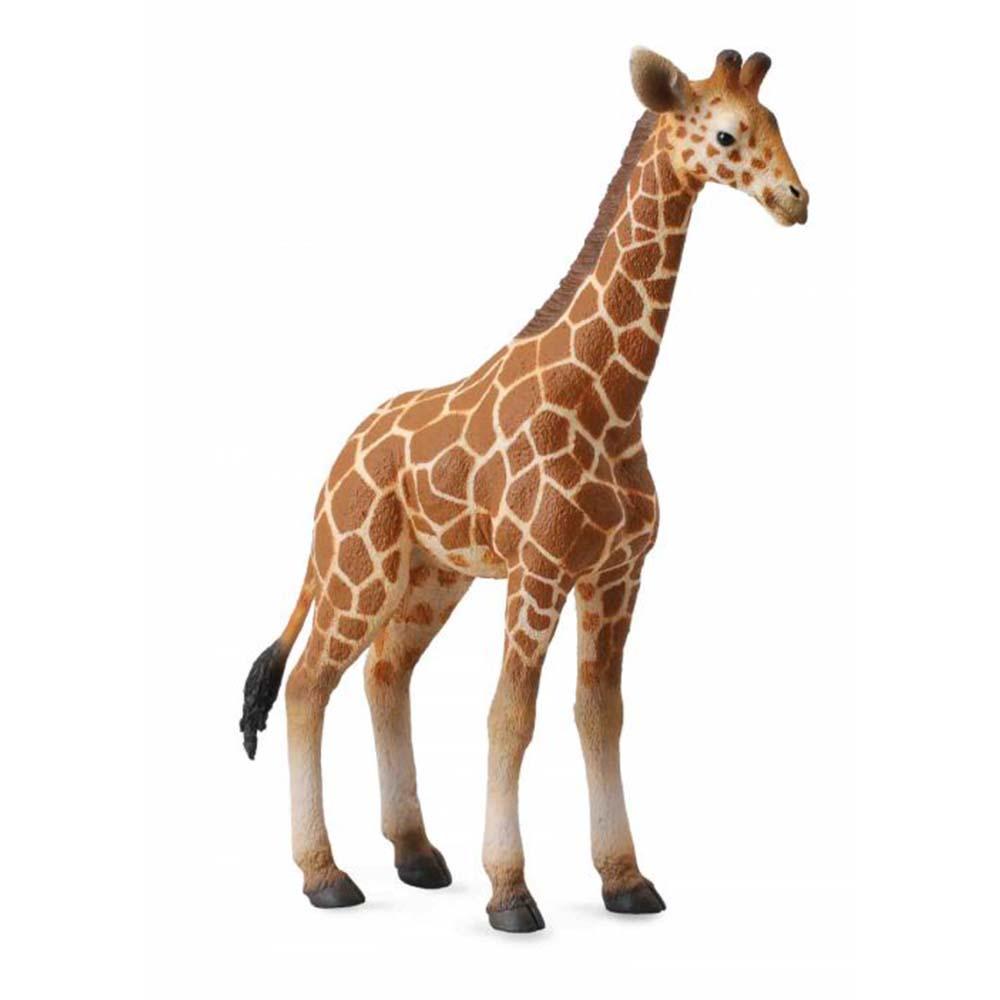 《 COLLECTA 》英國 Procon 動物模型 小網紋長頸鹿