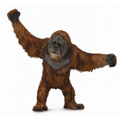 《 COLLECTA 》英國 Procon 動物模型 紅猩猩