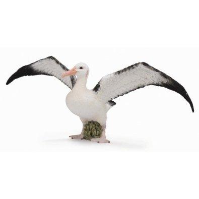 《 COLLECTA 》英國 Procon 動物模型 漂泊信天翁