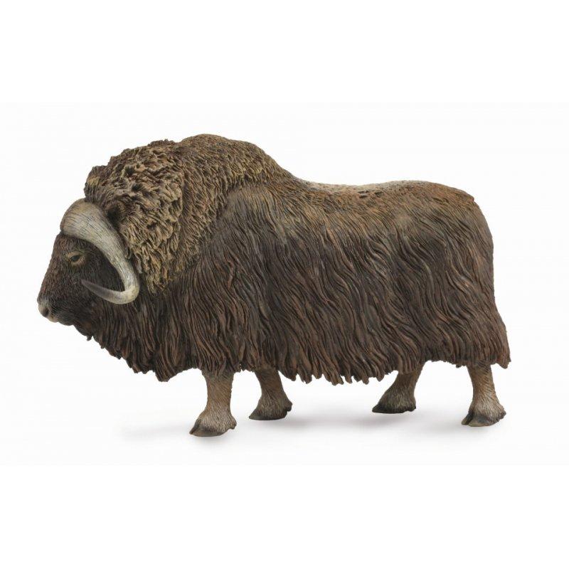 《 COLLECTA 》英國 Procon 動物模型 麝牛