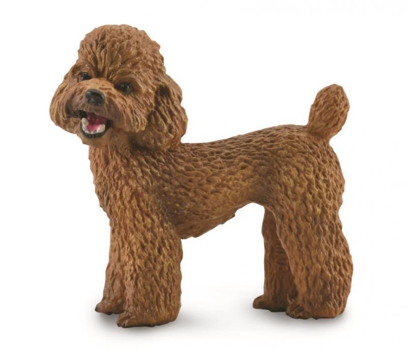 英國 Procon 動物模型 貴賓狗